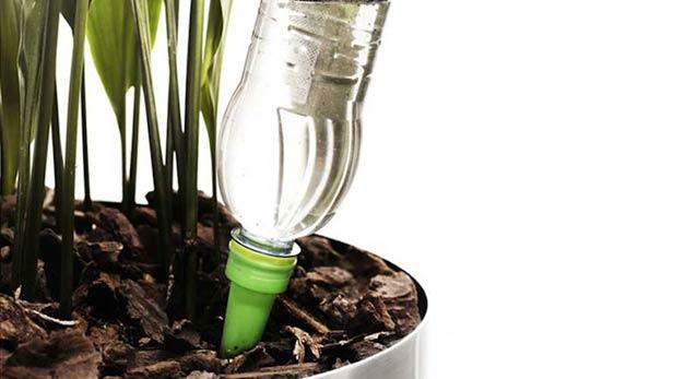 Come curare le piante durante le vacanze - Non sprecare