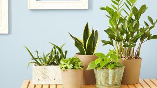 Le migliori 5 piante che purificano l 39 aria dallo smog piante in forma - Piante che purificano l aria in casa ...