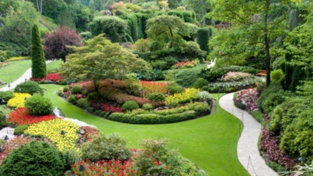 5 piante sempreverdi che non potranno mancare nel tuo giardino piante in forma - Arbusti sempreverdi da giardino ...
