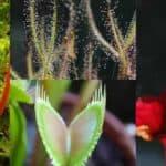 piante-carnivore-zanzare