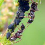 rimedi-contro-le-formiche