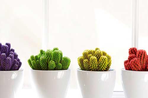 cactus-colorati