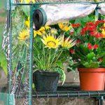 come-proteggere-le-piante-in-inverno