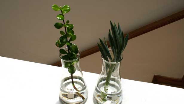 come-salvare-la-propria-pianta-marcia
