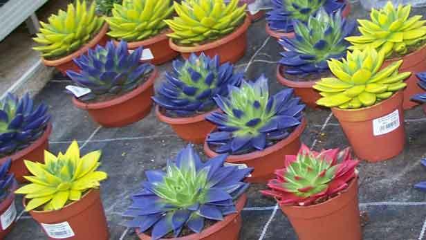 piante-deturpate-artificialmente
