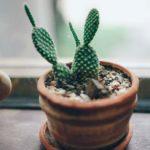 5-piante-che-ogni-appassionato-di-piante-grasse-dovrebbe-possedere