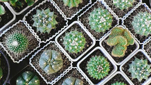 piante-piu-fotografate-2018