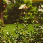 alberi-a-crescita-rapida