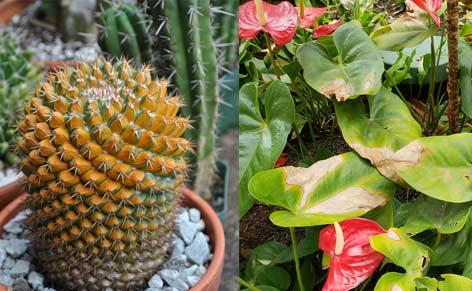 danni del sole alle piante