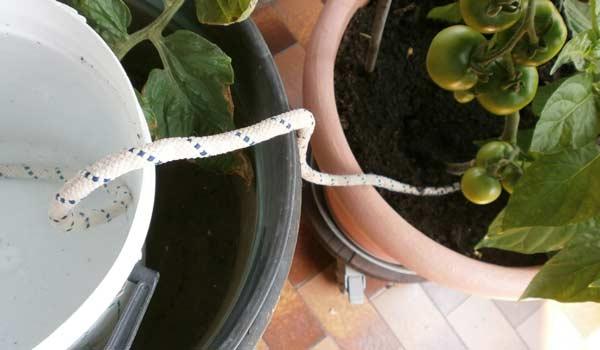 Innaffiare le piante in vacanza con filo