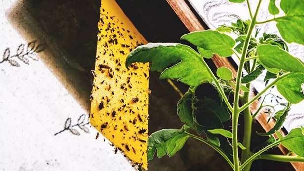 Eliminare moscerini nelle piante
