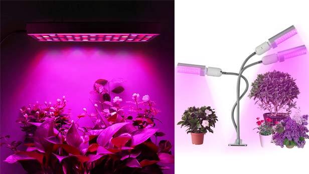 Luce artificiale per piante